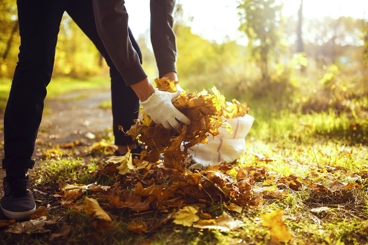 Collecting Leaves by ATN Mechanical