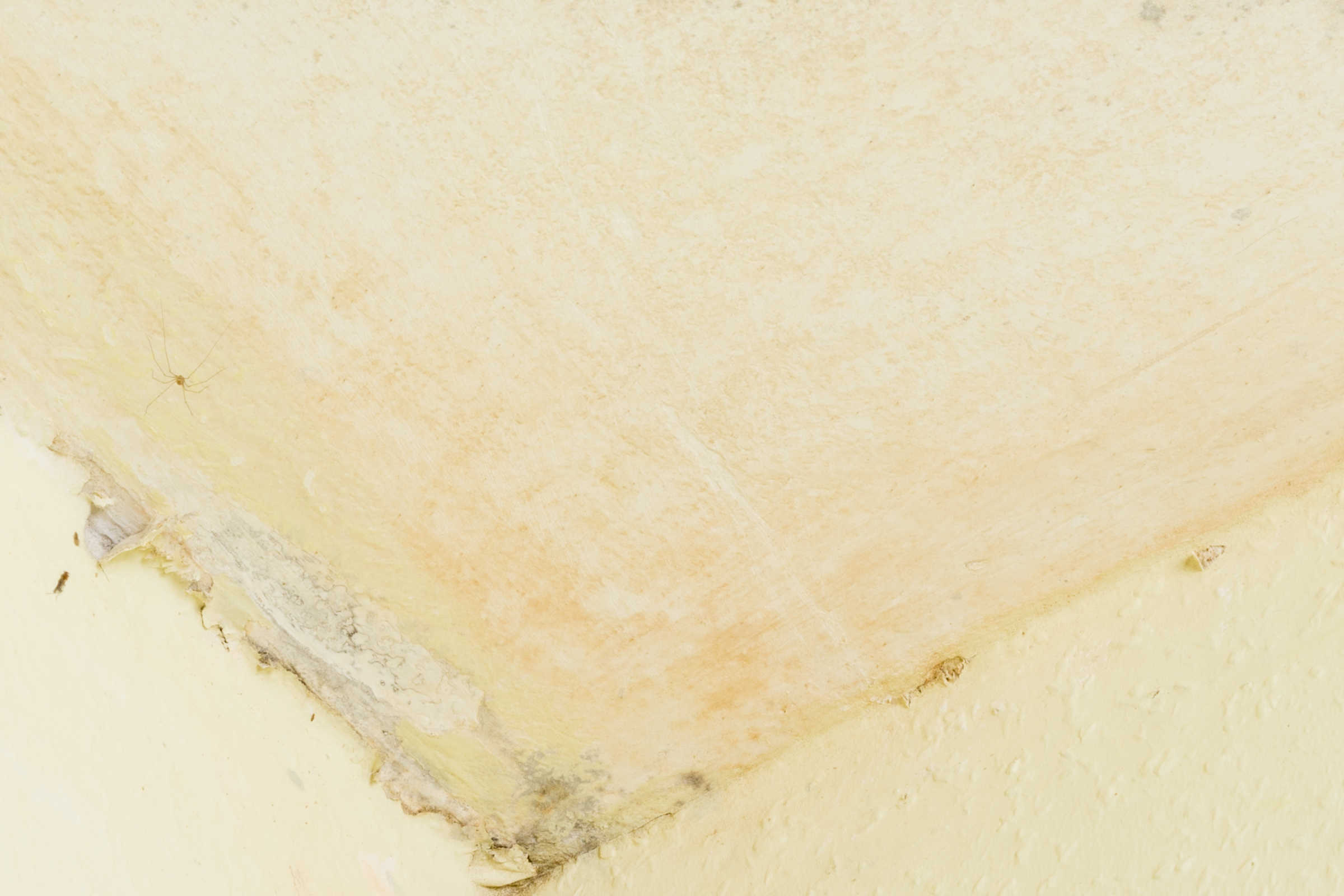 Dehumidifier Mould Prevention by ATN Mechanical Systems